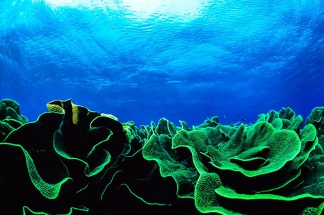 Ester Cecere, la poetessa – biologa marina