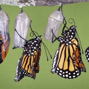 Horror: La fabbrica di farfalle