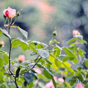 Il vero immortale è l'amor…